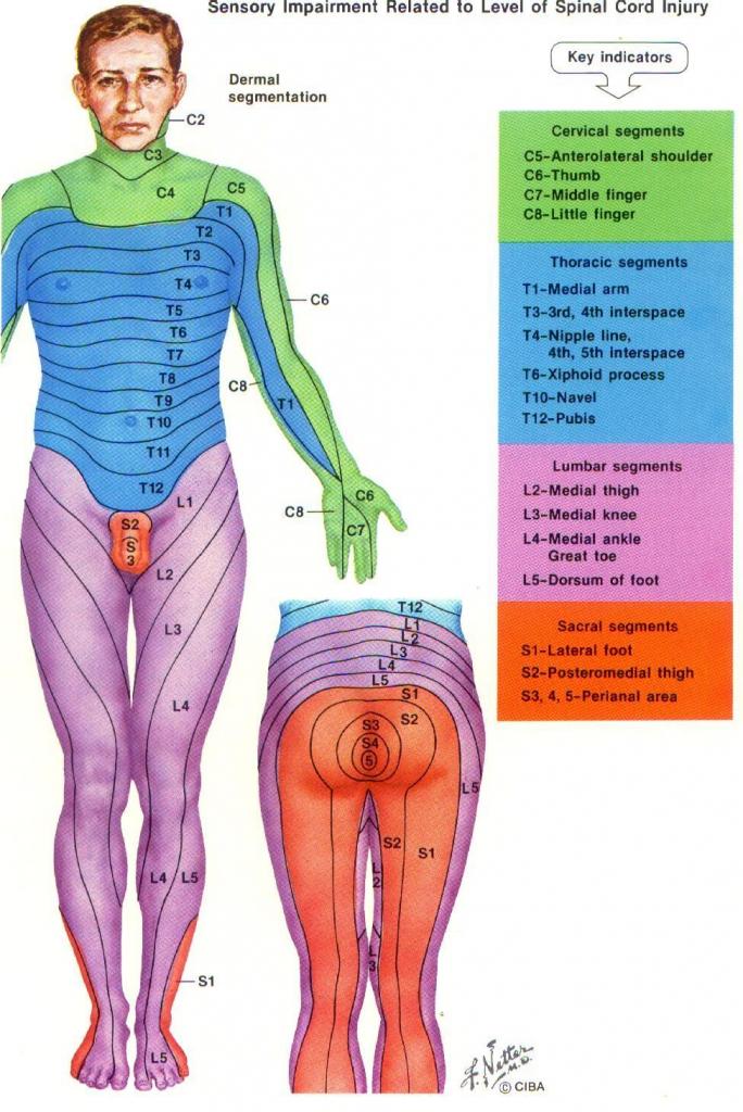√ Dermatome Chart With Symptoms inside Printable Dermatome Map