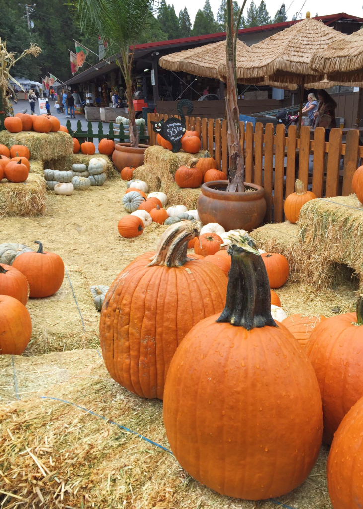 The Best Fall Treats And Activities In Apple Hill, California - A for Apple Hill Printable Map